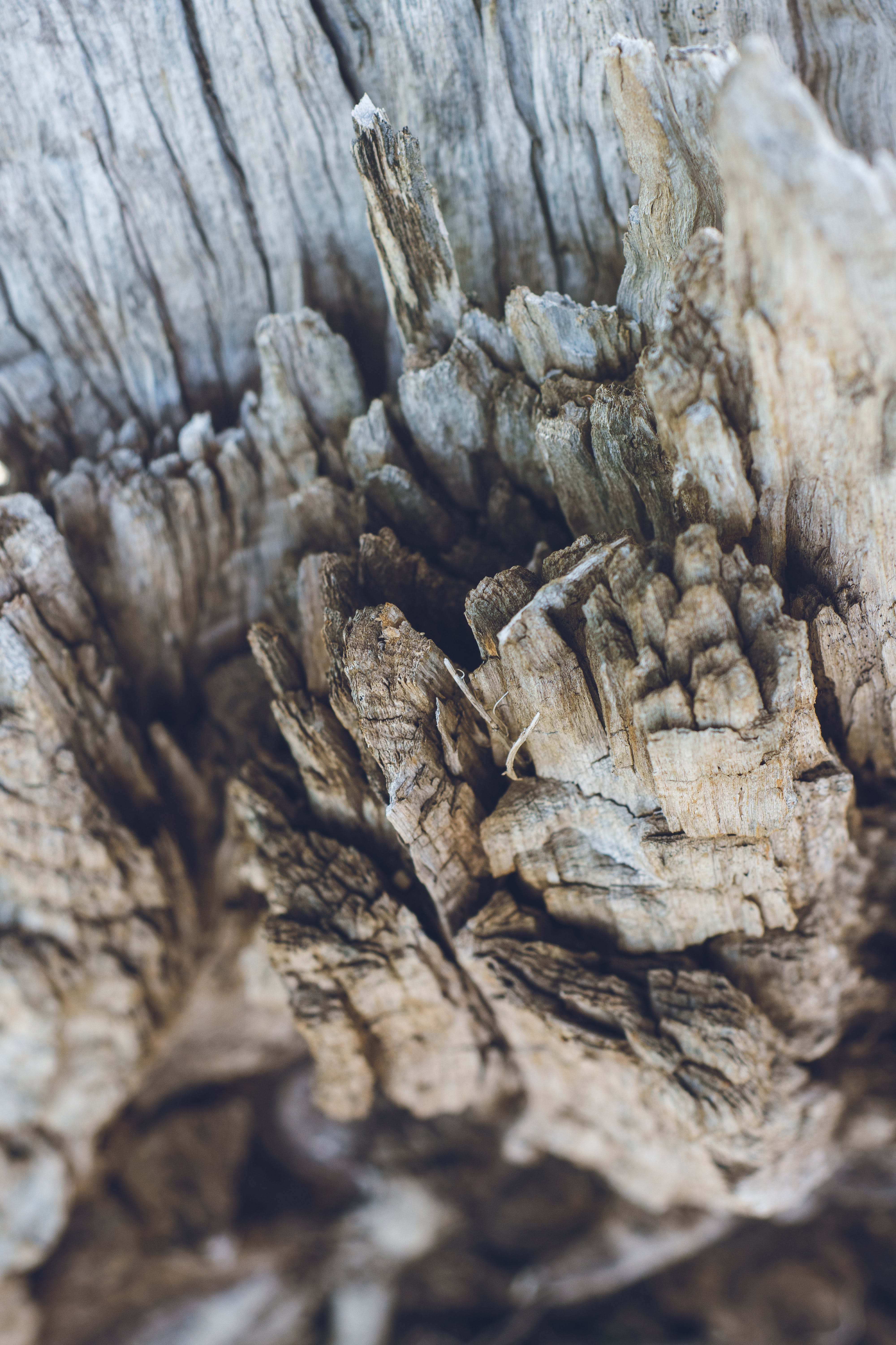 Free stock photo of wood, nature, dry, texture