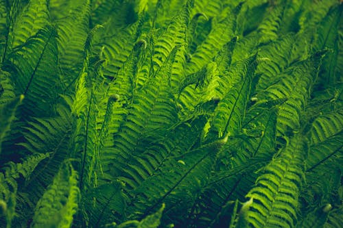 close-Up Photography of Fern