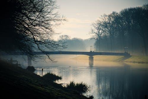 Immagine gratuita di acqua, alberi, luce del giorno, nebbia