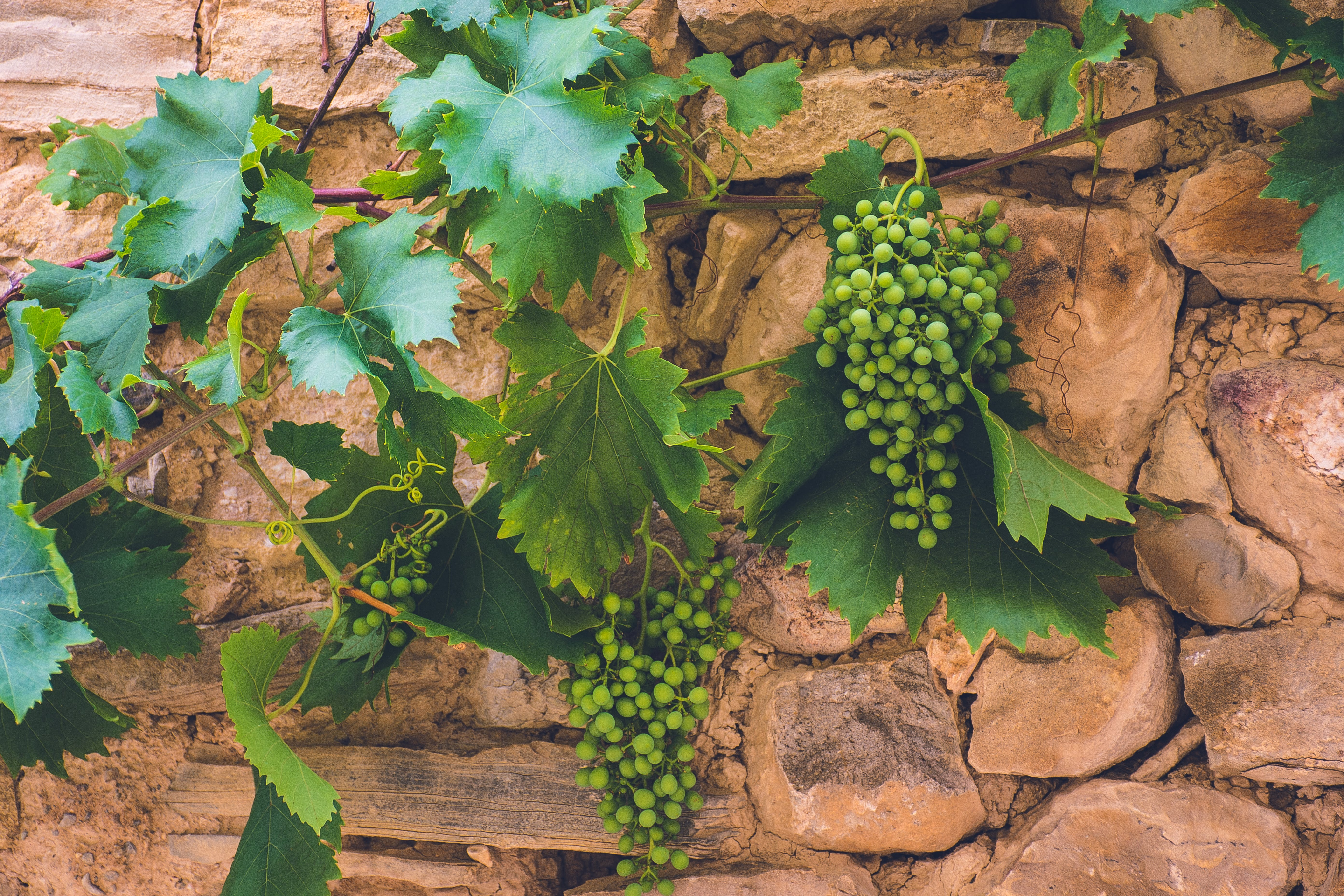 Free stock photo of grapes, travel, rock, spain