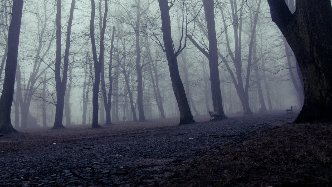 Free stock photo of forest, incredible, mood