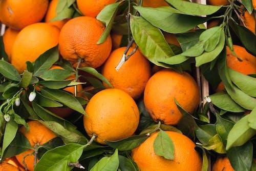 Immagine gratuita di agricoltura, agrume, arance