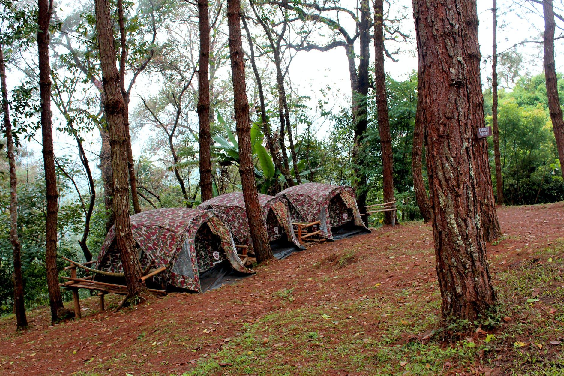 3 brown tents beside green leaf trees