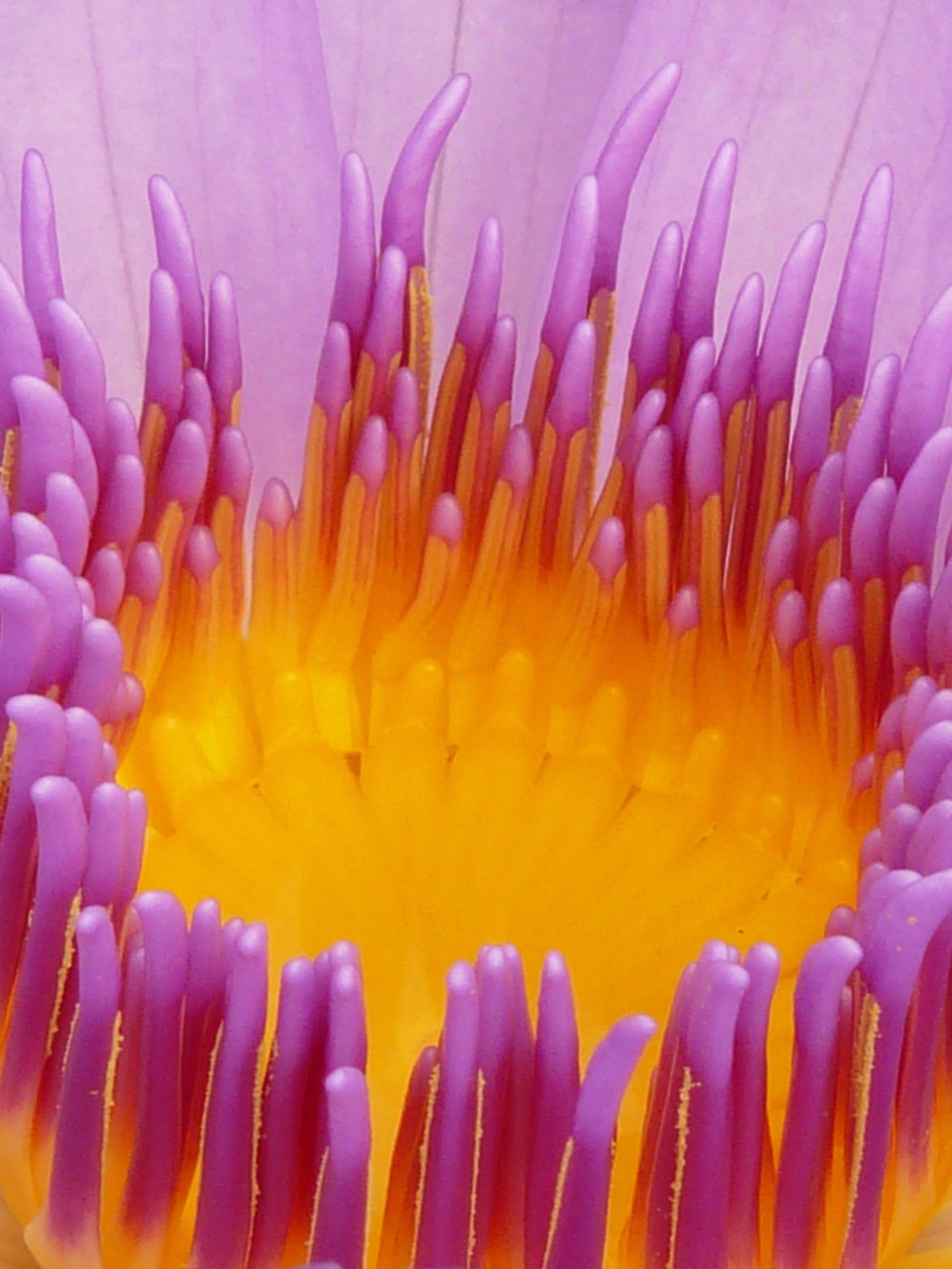 Macro Photo of Flower Pistil