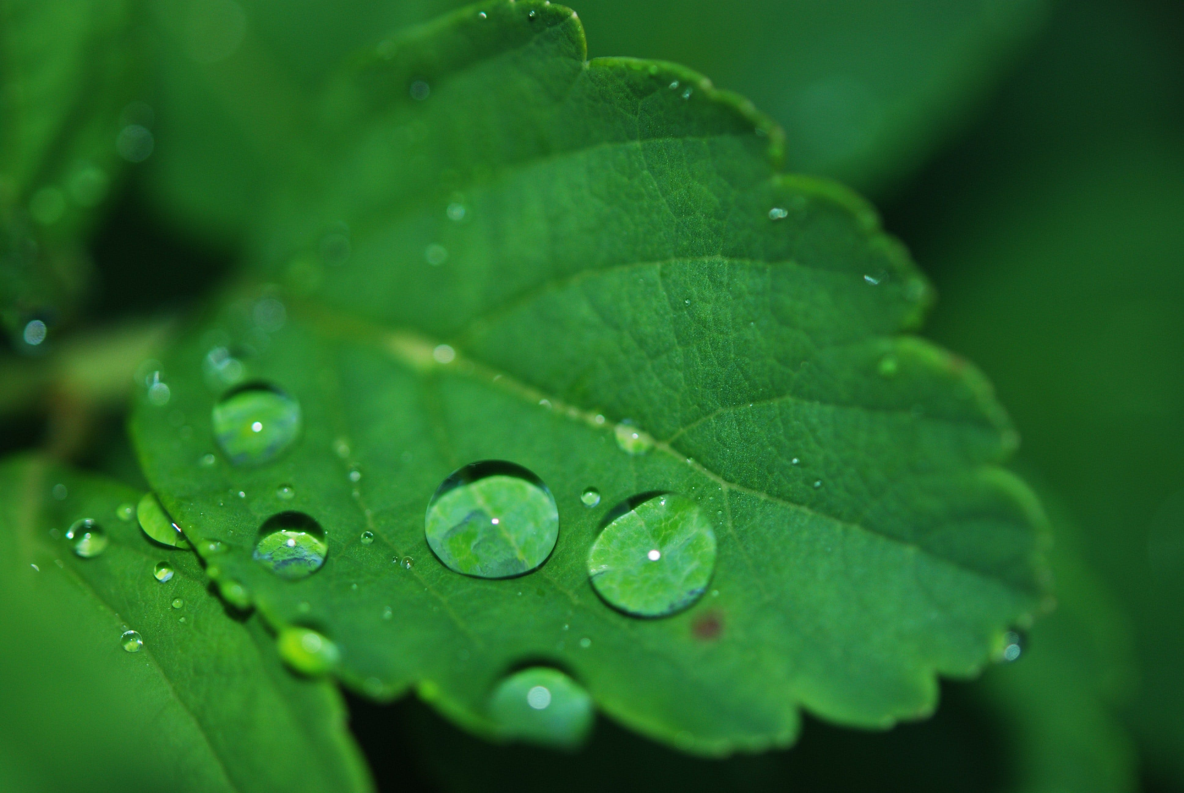 Free stock photo of nature, leaf, dew, green