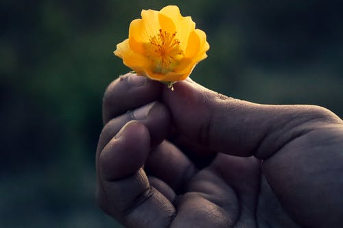 Free stock photo of beautiful flowers, hand, outdoor