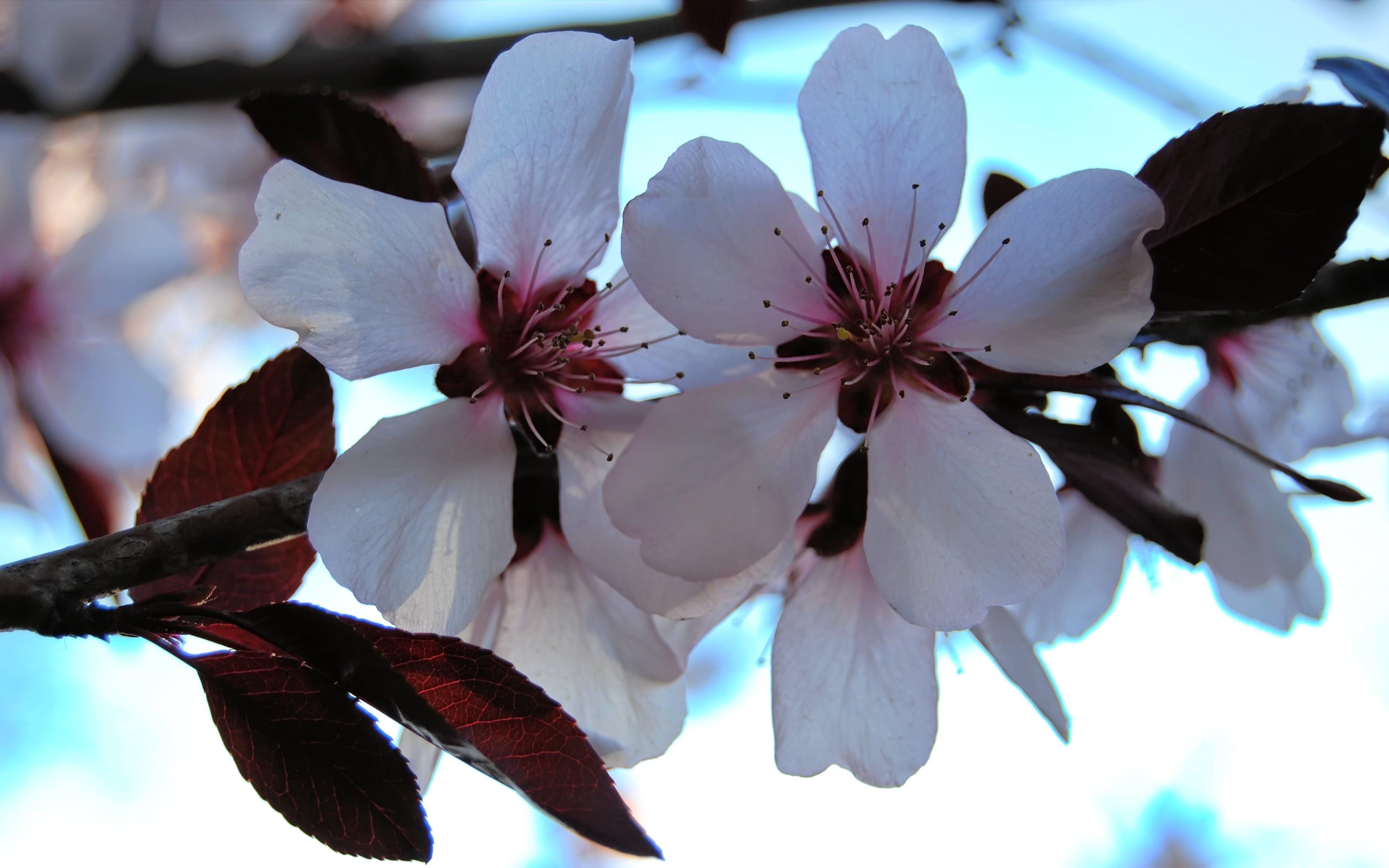 Foto stok gratis berkembang, bunga-bunga, flora, kelopak