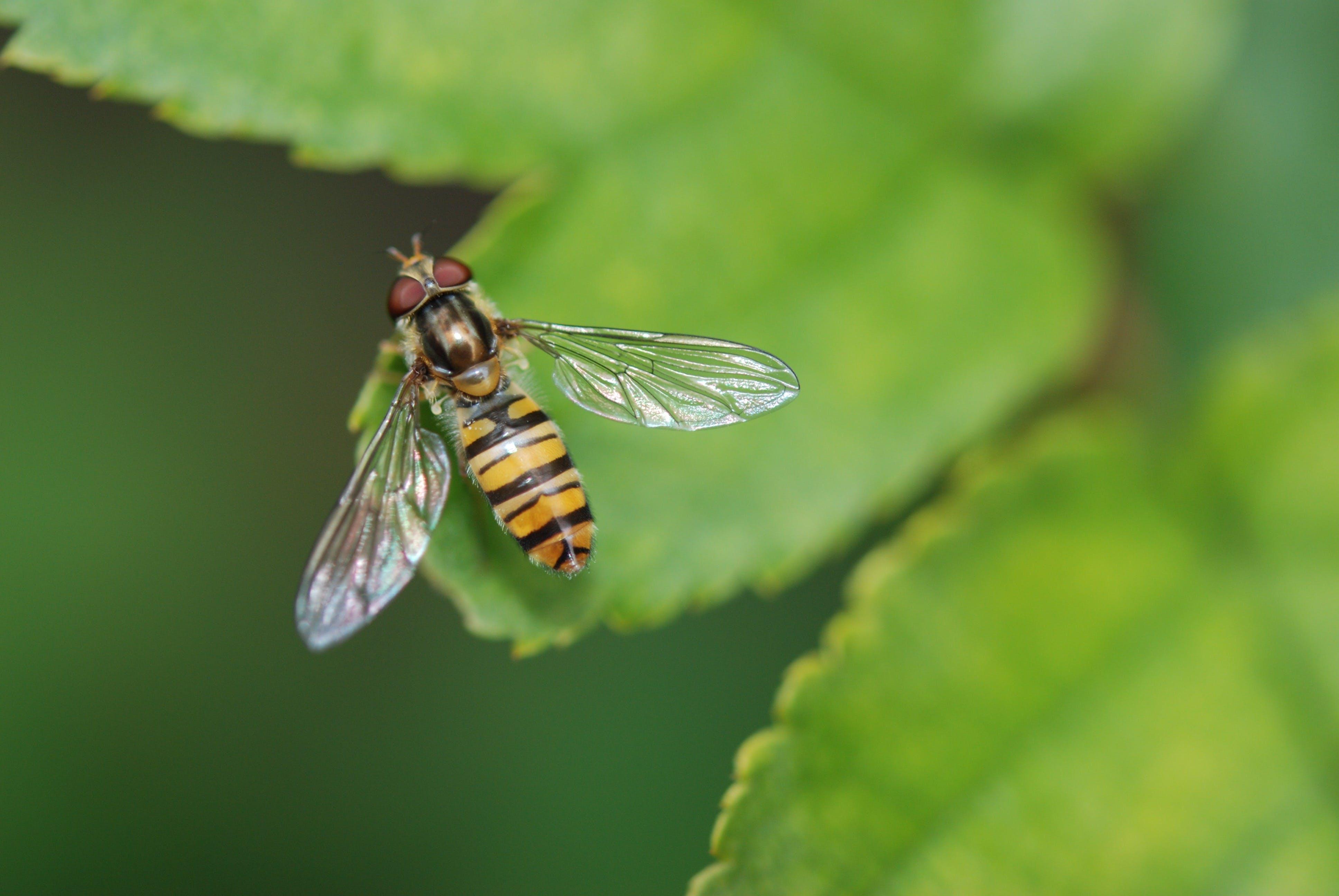 Ingyenes stockfotó makró, méh, rovar, természet témában