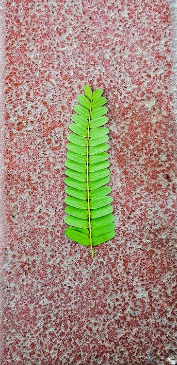 Free stock photo of dark green, green, mobile upload