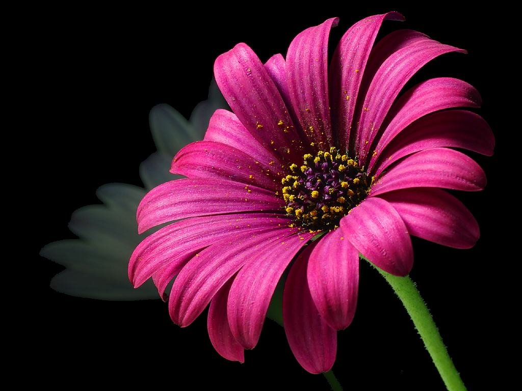 Pink Flower Wallpaper Hd 6