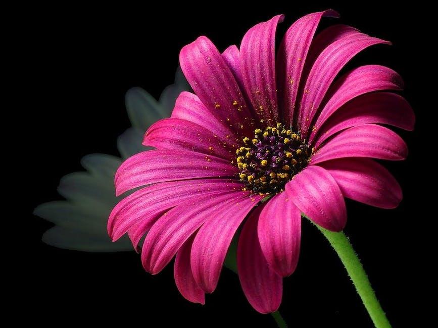 اجمل خلفيات ورود 2017,اجمل الخلفيات ورد حمراء جديدة رومانسية طبيعية للكمبيوتر لعشاق daisy-pollen-flower-