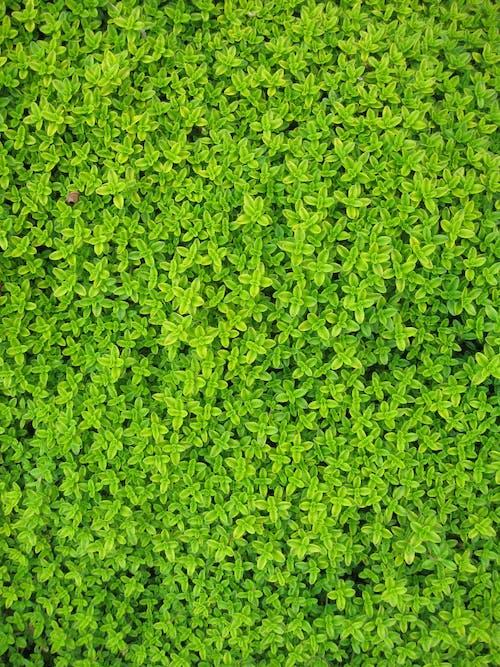 Green Petaled Flower
