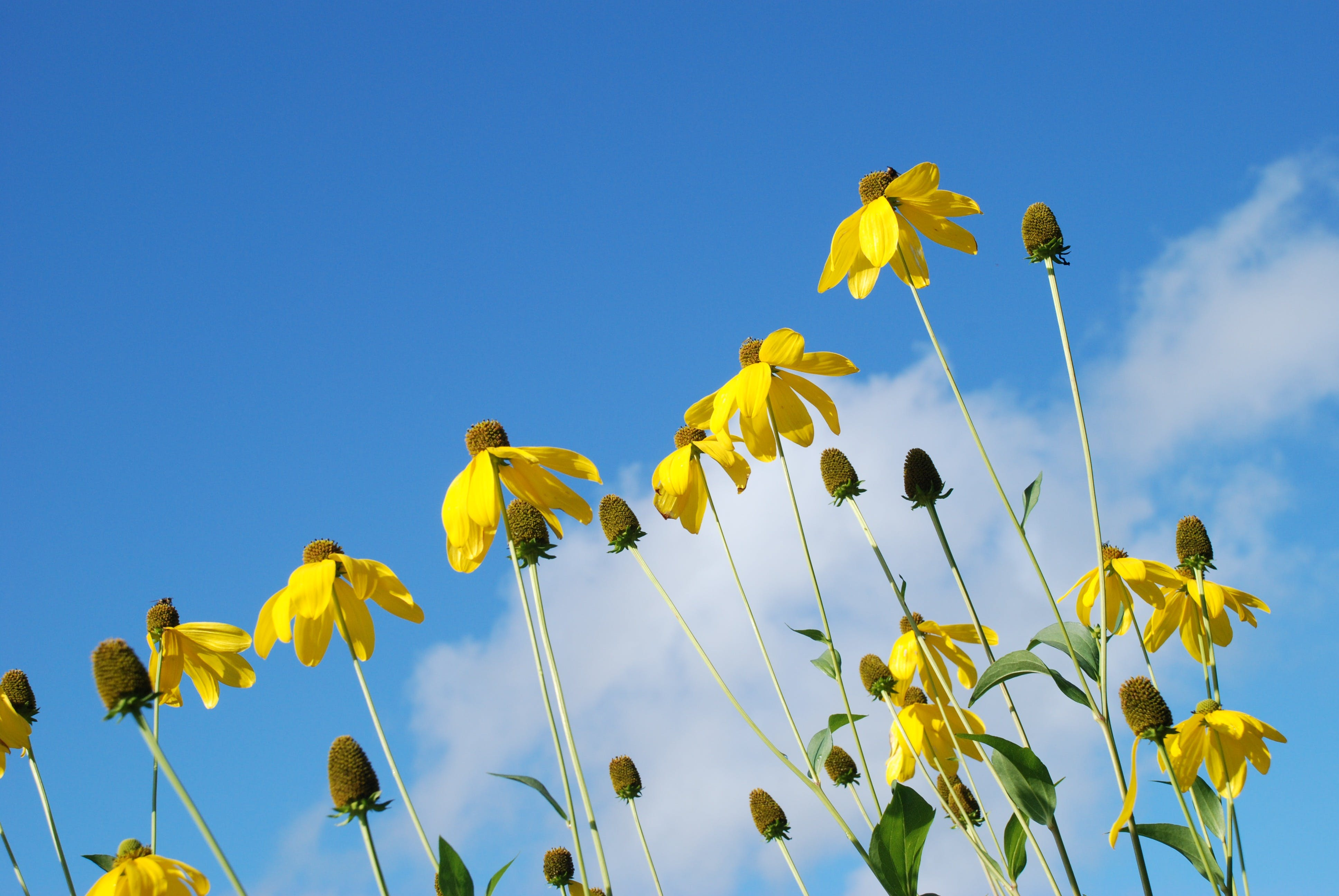 Free stock photo of sky, clouds, garden, yellow