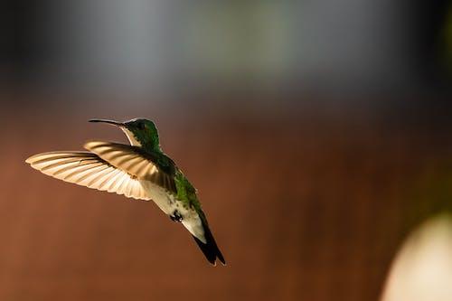 Free stock photo of animal, bird, bird house