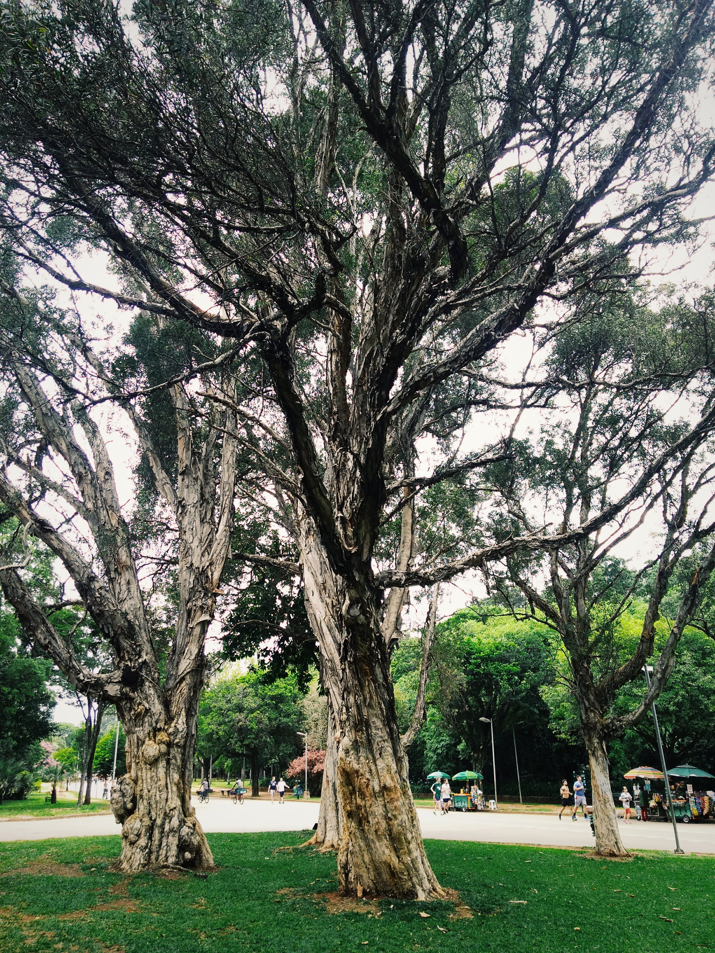 Trees Surrounding Park
