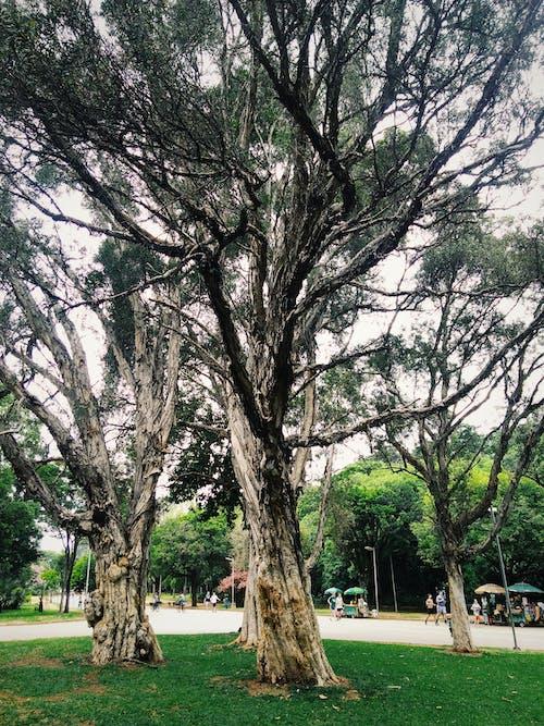คลังภาพถ่ายฟรี ของ กลางวัน, ก้าน, การแข่งขันบนมือถือ, ต้นไม้