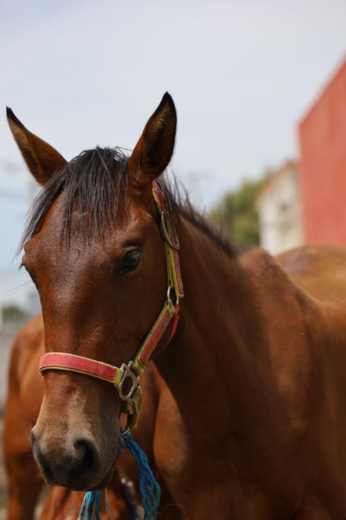 A Brown Horse in the Ranch