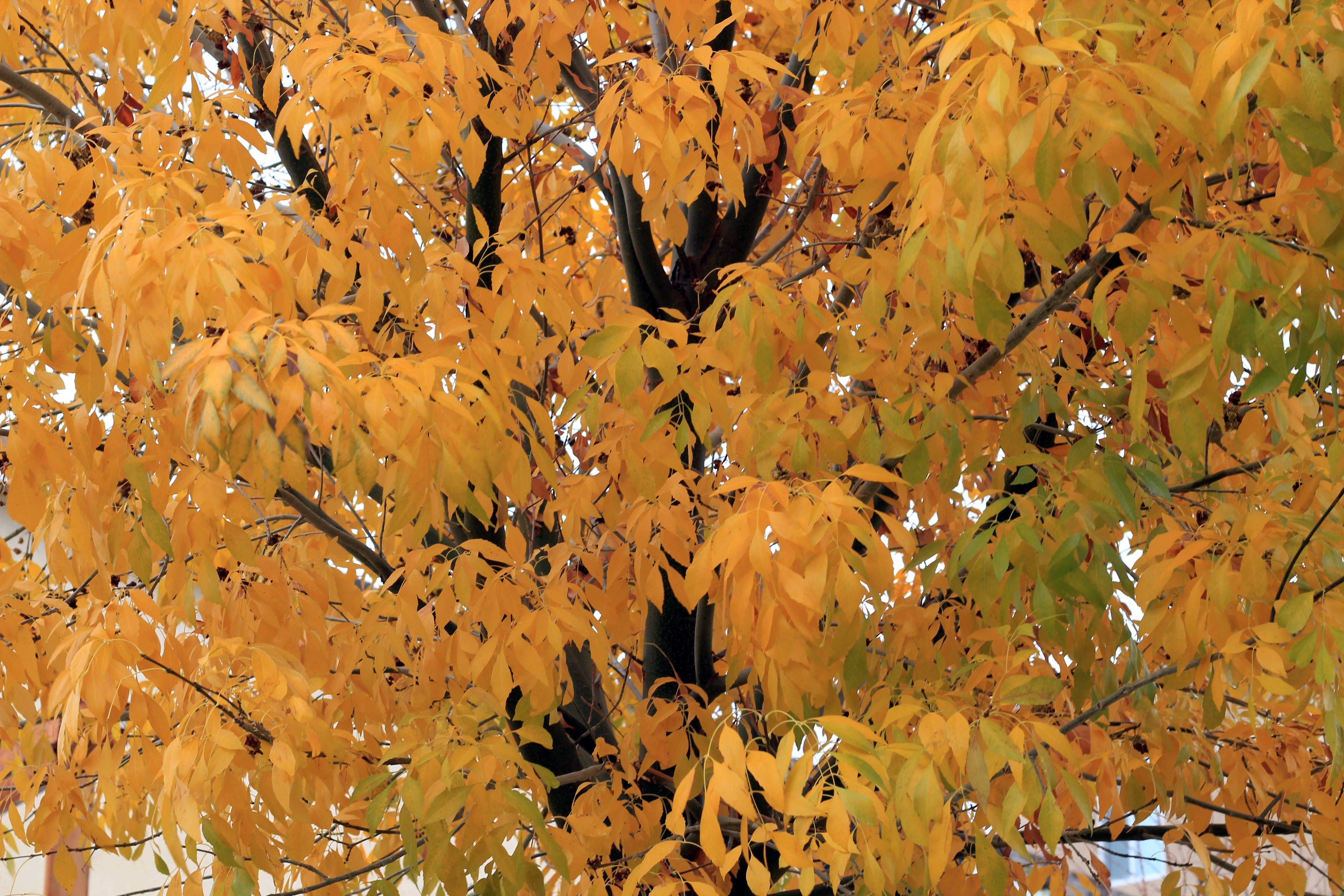 Free stock photo of autumn leaves, tree