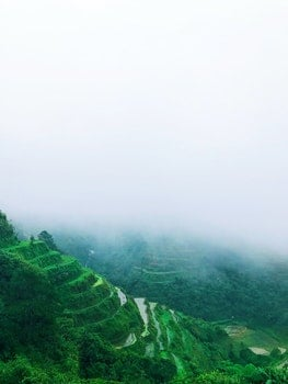 Green Rice Terraces With Foggy Weather