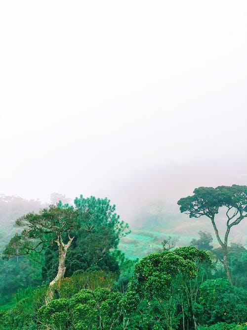 Základová fotografie zdarma na téma les, stromy