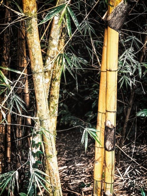 Gratis arkivbilde med bambus, bambustrær, opp opp