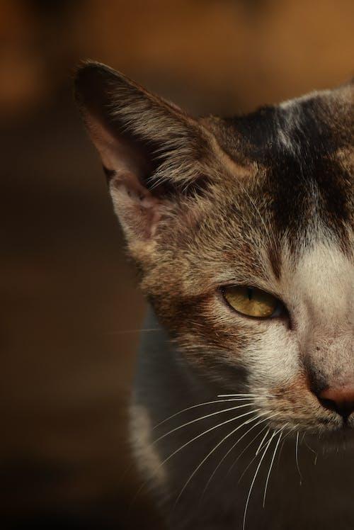 Δωρεάν στοκ φωτογραφιών με # στάση # catseye