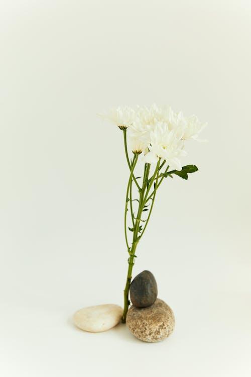 和諧, 和谐, 增長 的 免费素材图片