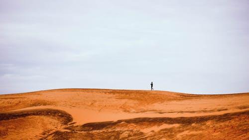 Základová fotografie zdarma na téma denní, denní světlo, dobrodružství, duna