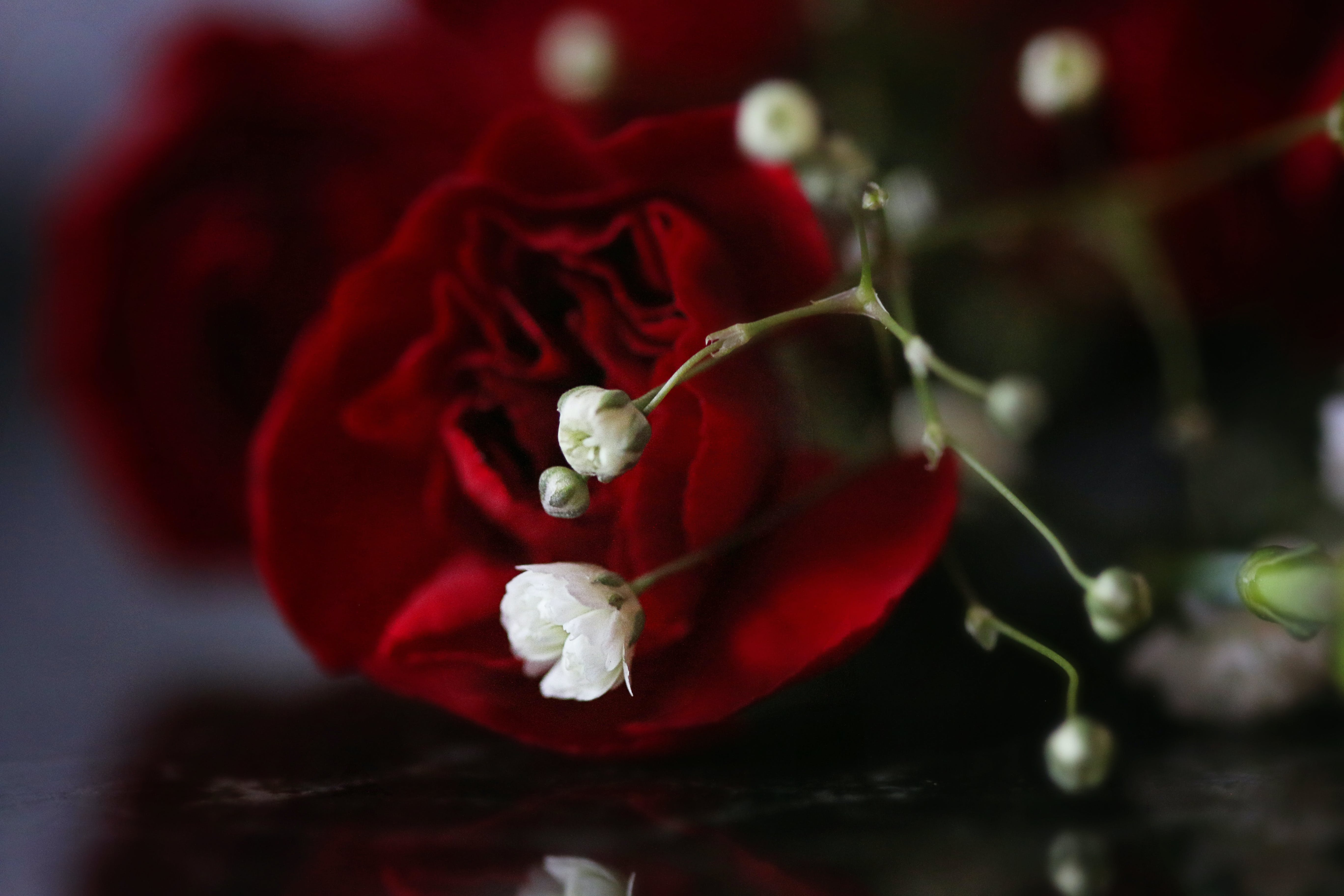 Red Rose Flower and White Baby's-breath Flower
