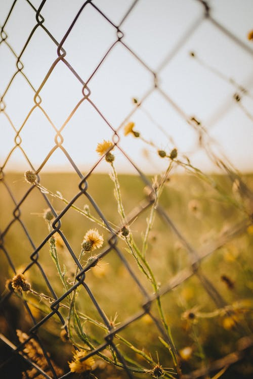 Yellow Flowers on Gray Metal Fence