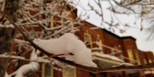 Kostenloses Stock Foto zu baum, schnee, tageszeit, unscharfen hintergrund