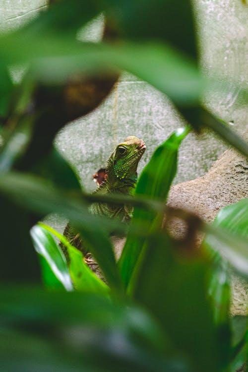 Free stock photo of amazon, big leaf, blur