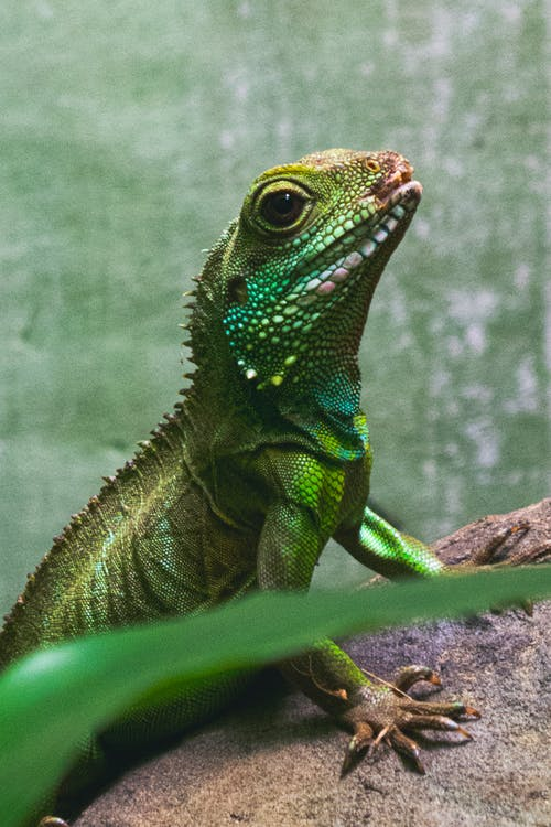 Green and Brown Lizard on Brown Tree Branch