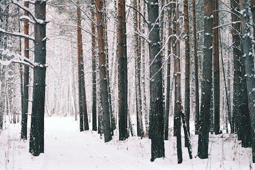 Fotobanka sbezplatnými fotkami na tému chladný, krajina, les