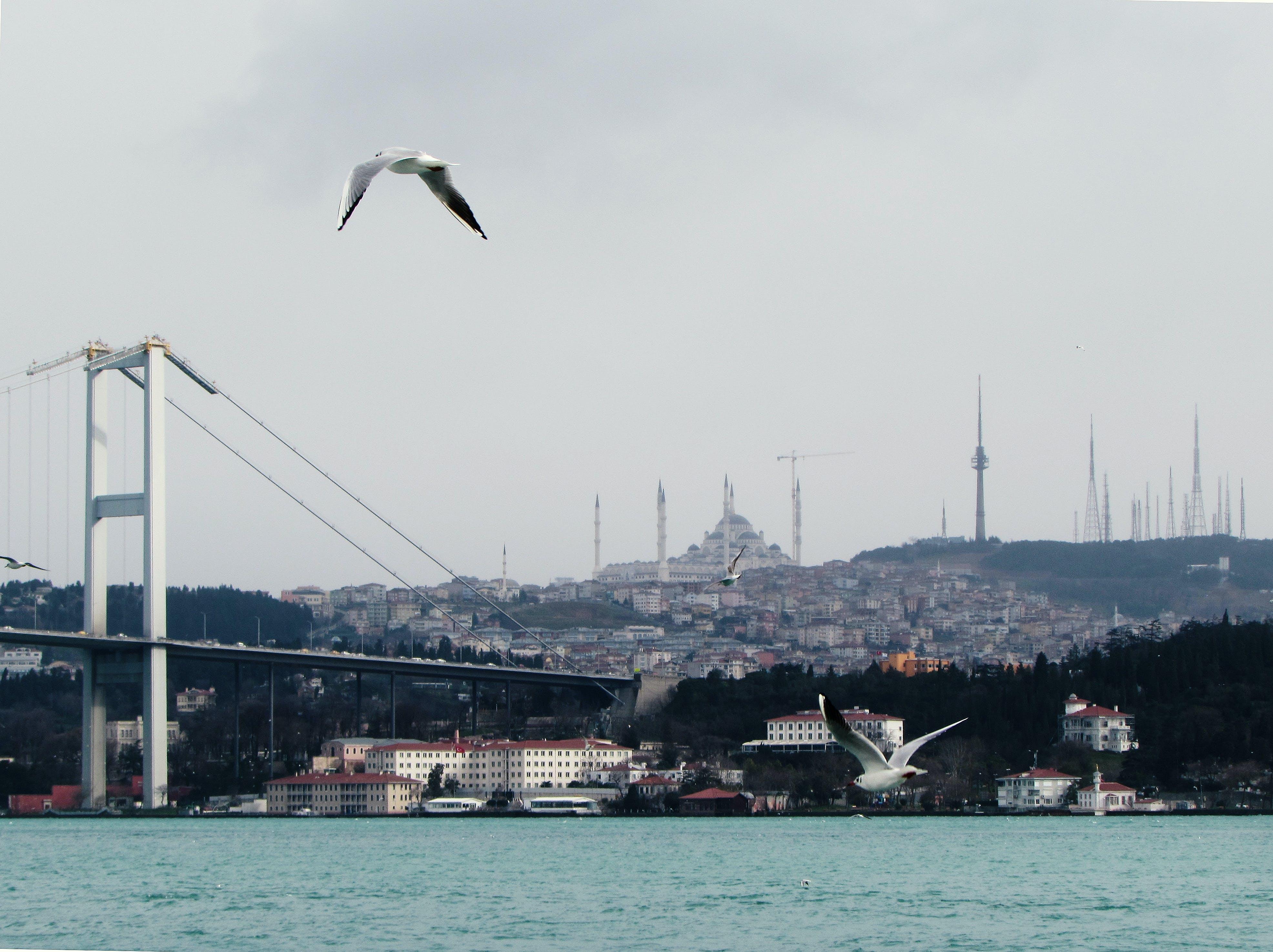 Free stock photo of asia, bosphorus, europe, Istanbul