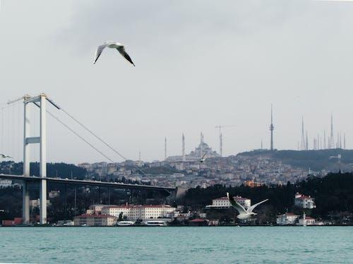 Imagine de stoc gratuită din Asia, bosphorus, Europa, Istanbul