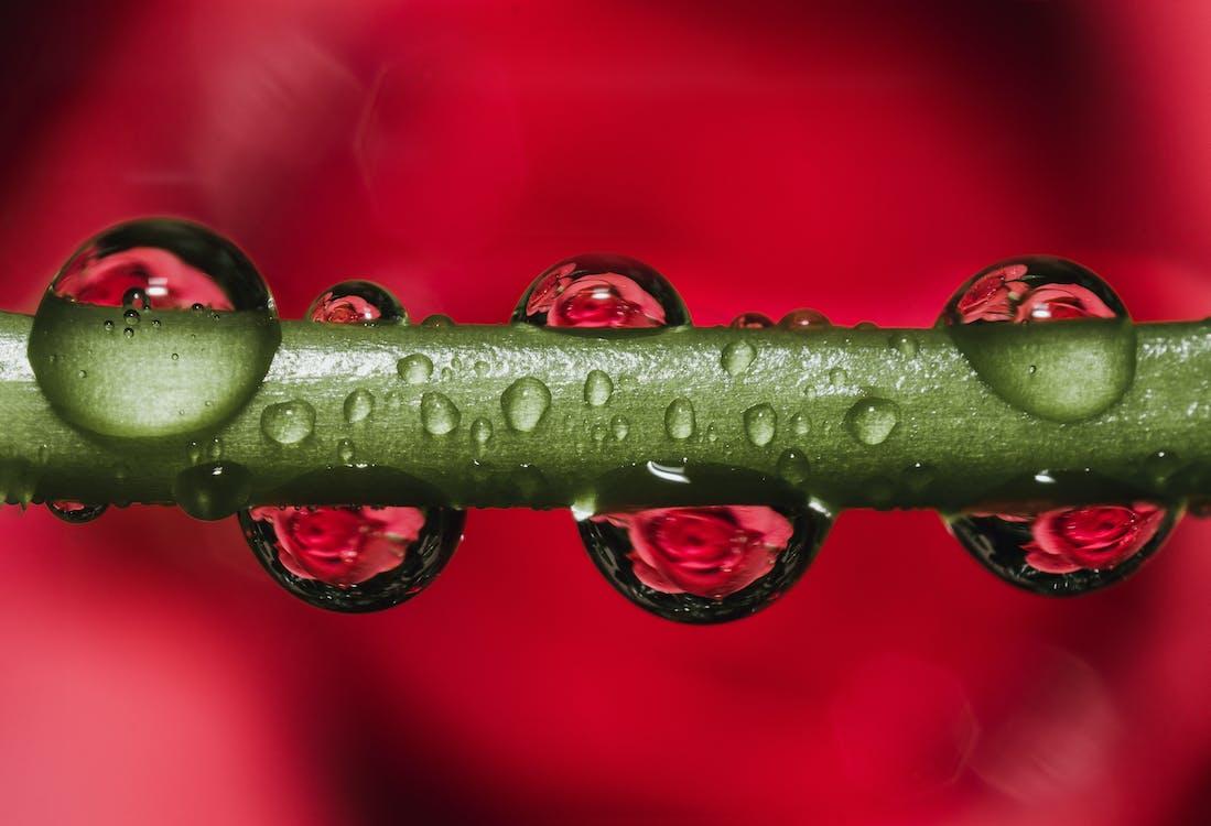 Darmowe zdjęcie z galerii z krople, krople rosy, krople wody