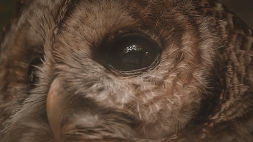 Ingyenes stockfotó állat, állatkert, álló kép témában