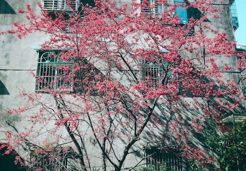 Ilmainen kuvapankkikuva tunnisteilla ikkunat, kasvikunta, kukat, oksat