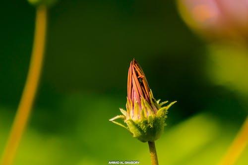 doğal, sarı, yeşil içeren Ücretsiz stok fotoğraf