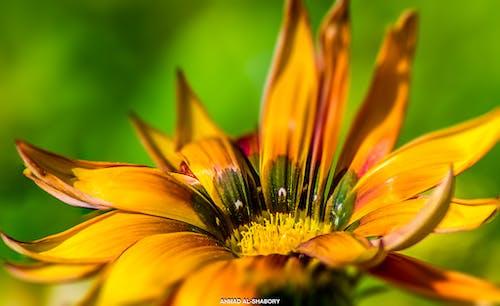 çiçek, doğal, makro, sarı içeren Ücretsiz stok fotoğraf