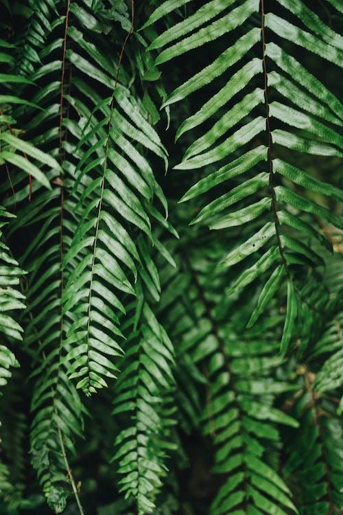 나뭇잎, 녹색, 무성한의 무료 스톡 사진
