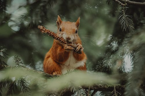 Brown Squirrel on Green Tree Branch