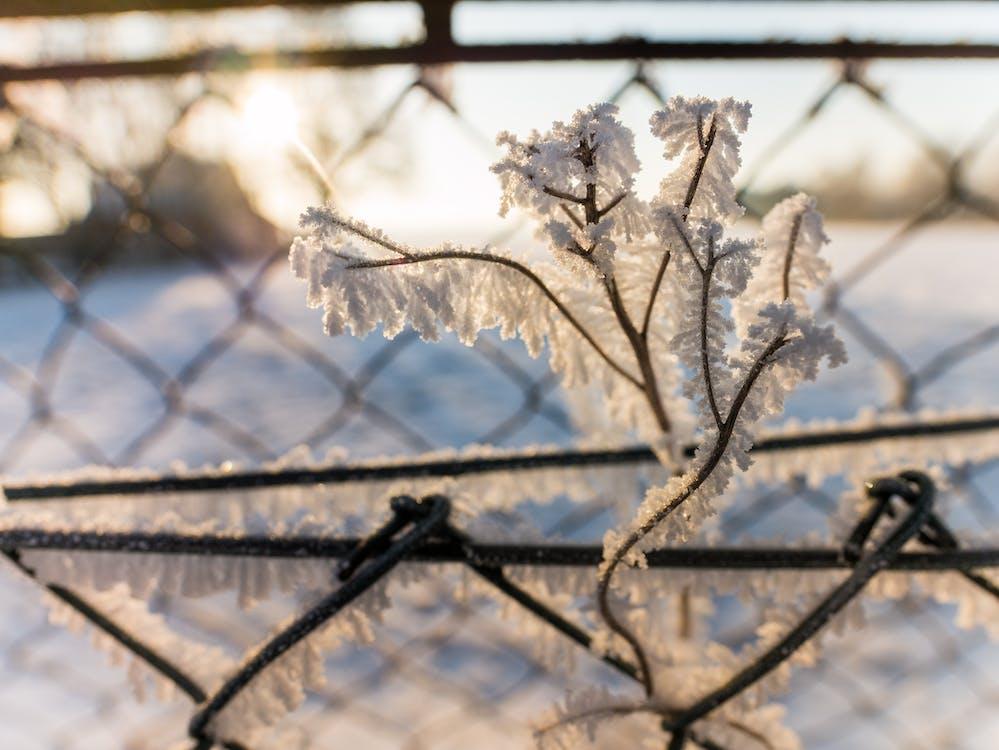 一月, 冬季, 冰