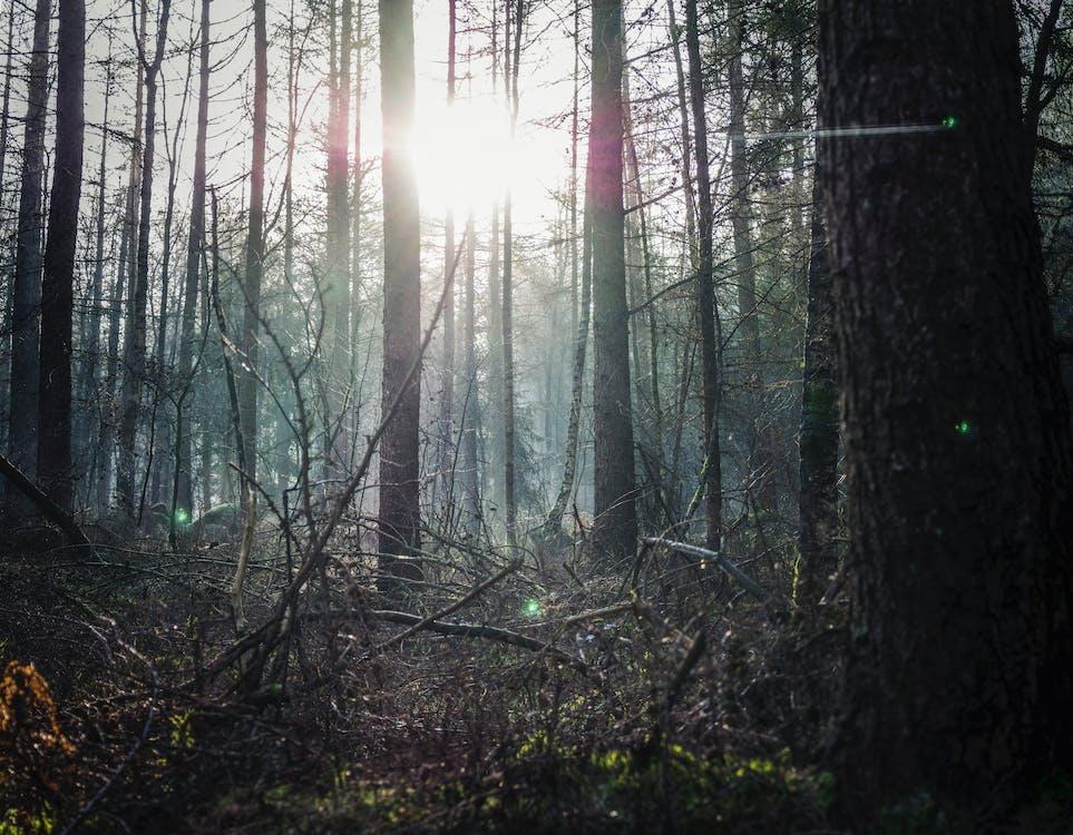 amanecer, arboles, bosque