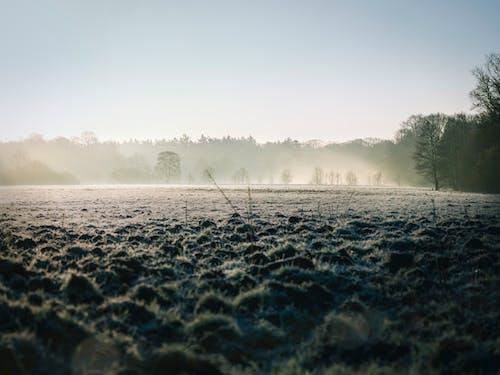 Immagine gratuita di alberi, campo, erba, impianti