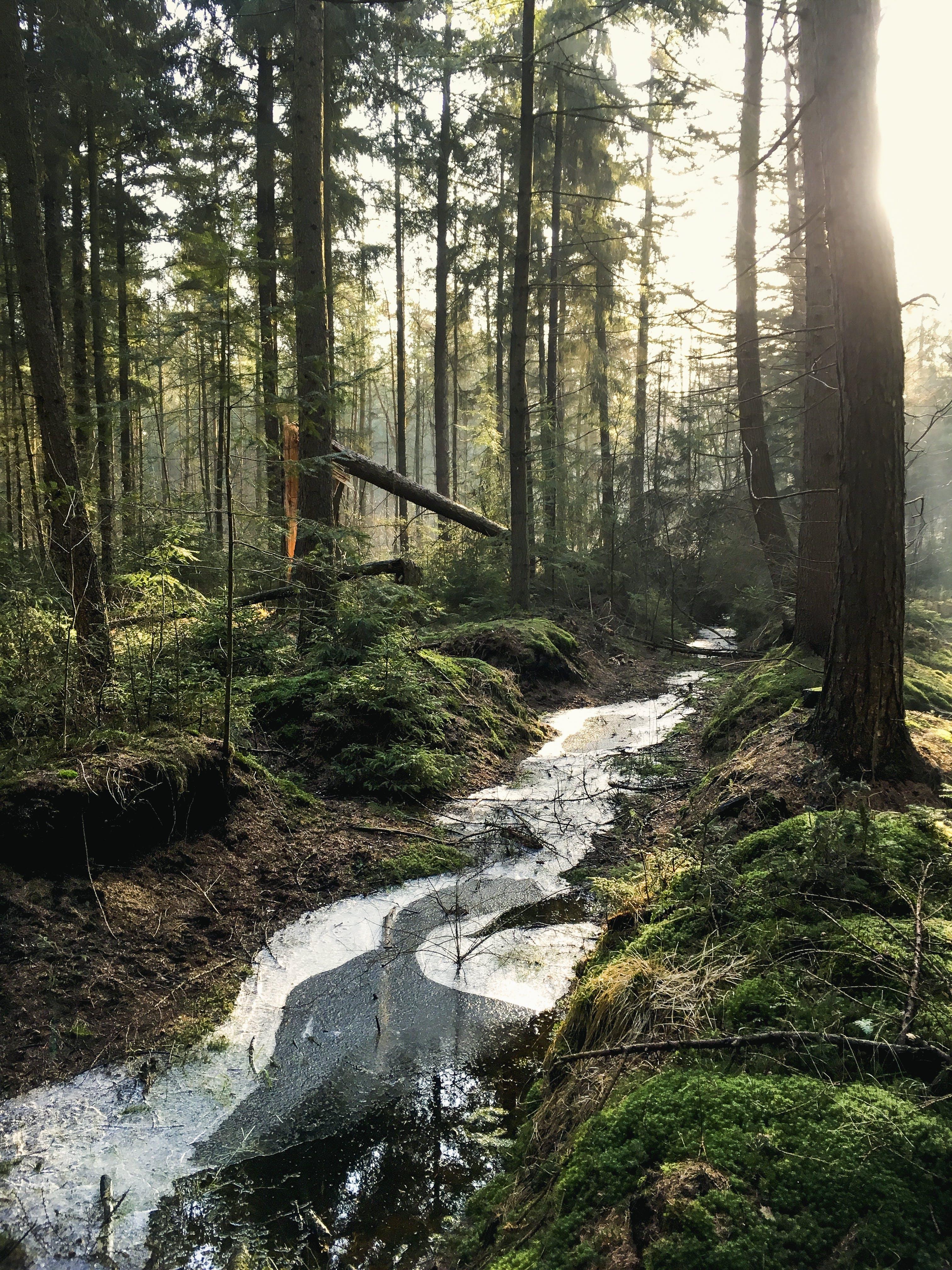 Gratis lagerfoto af å, dagslys, jungle, malerisk