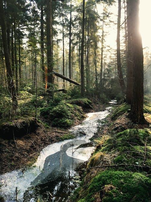 Безкоштовне стокове фото на тему «mobilechallenge, вода, Денне світло, дерева»