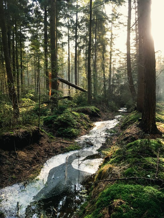 Landscape Photography of Forest