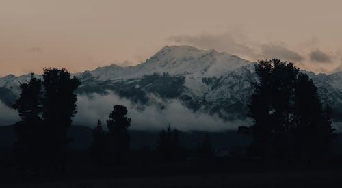 Fotos de stock gratuitas de amanecer, árbol, escénico